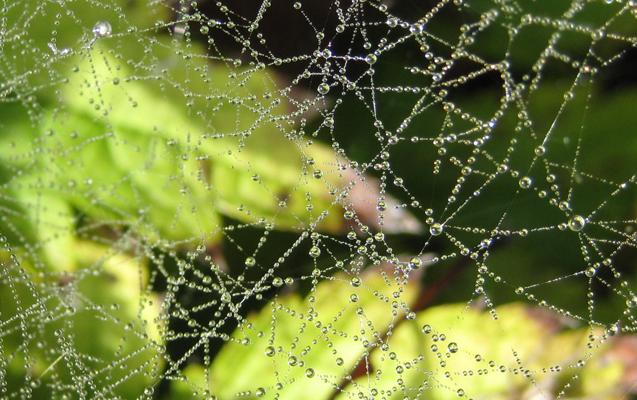 Wonderful web